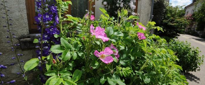 bandeau fleuri